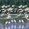 Bird Watching: Healthy Hobby
