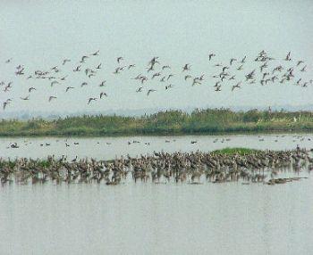 Chilka Lake Bird Sanctuary