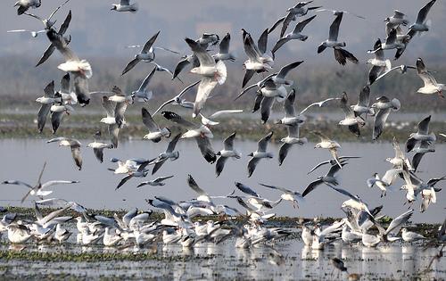 Okhla Bird Sanctury